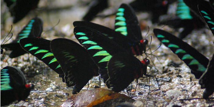 Butterfly & Reptile Sanctuary Malacca - Melaka Tourist Attractions