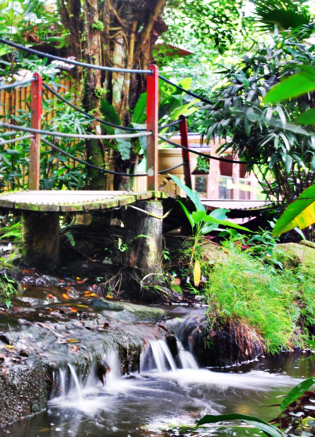 Koi River Valley Butterfly & Reptile Sanctuary Malacca - Melaka Tourist Attractions