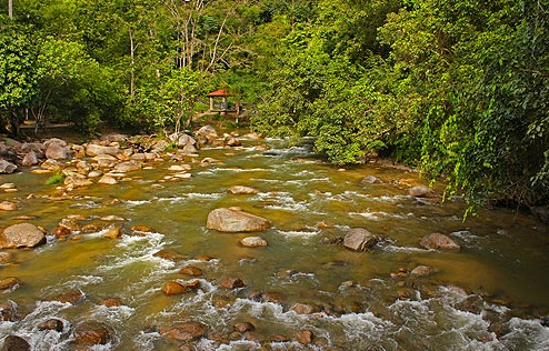 Kuala Woh - Recreational Forest Tapah - Perak Tourist Attractions